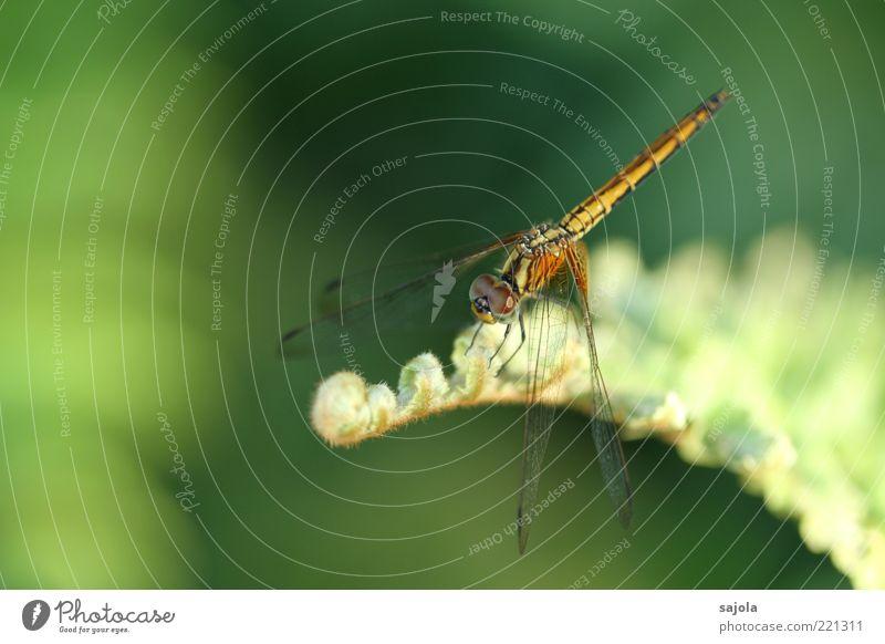 zarte schönheit II Natur grün Pflanze Tier Erholung warten sitzen weich Flügel Insekt Wildtier Grünpflanze Libelle Pastellton Textfreiraum links
