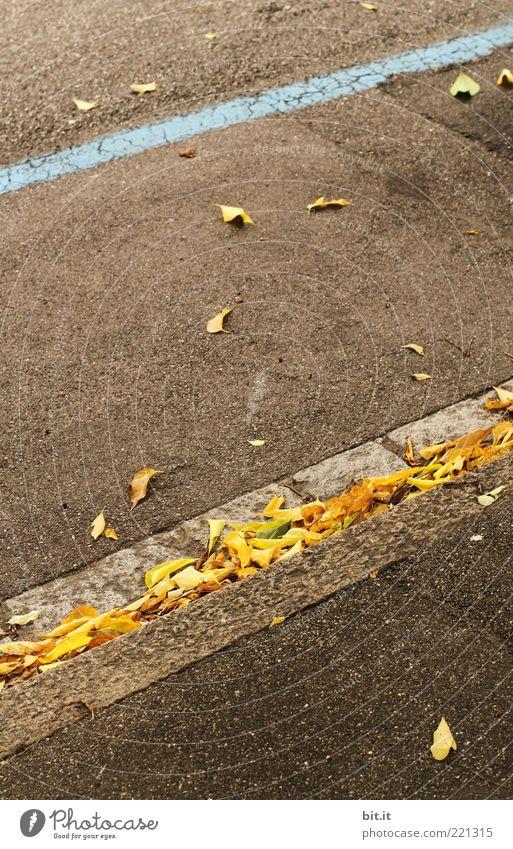 Streifen Straße Wege & Pfade Stein Linie einfach trocken unten braun gelb grau Perspektive Wandel & Veränderung Herbst Herbstlaub herbstlich Asphalt Blatt