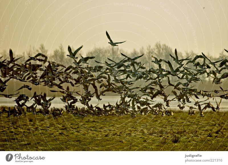 auf gehts Umwelt Natur Landschaft Pflanze Tier Wasser Klima Gras Wiese Küste See Wildtier Vogel Tiergruppe Schwarm Bewegung fliegen natürlich wild Stimmung