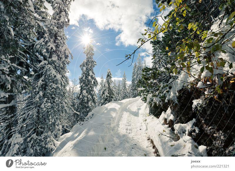 Winterspaziergang Natur Landschaft Himmel Wolken Sonne Sonnenlicht Wetter Schönes Wetter Eis Frost Schnee Baum Berge u. Gebirge Wege & Pfade hell kalt blau grün