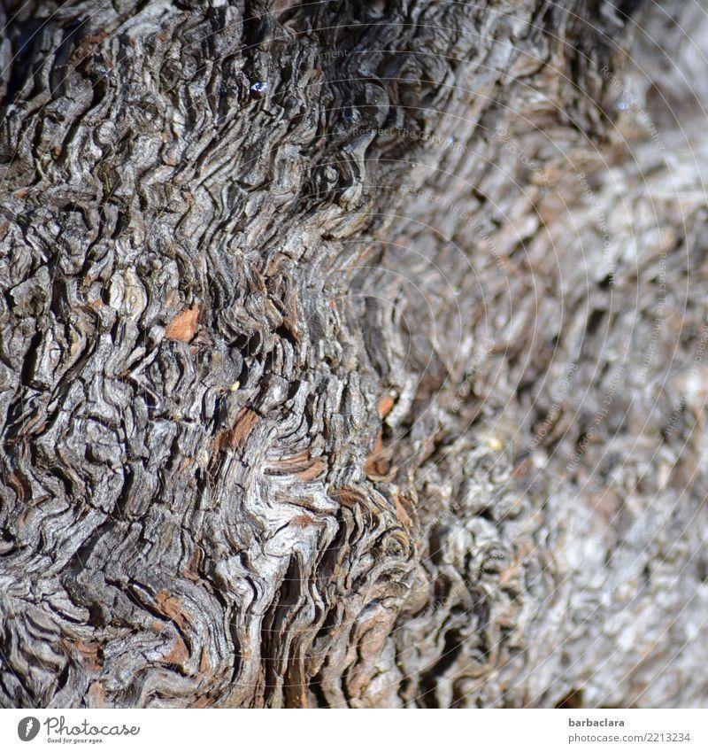 schwungvoll(e) | Wellenlinien Natur alt Pflanze Baum Umwelt grau Linie Vergänglichkeit Wandel & Veränderung Spuren bizarr Zerstörung Baumwurzel