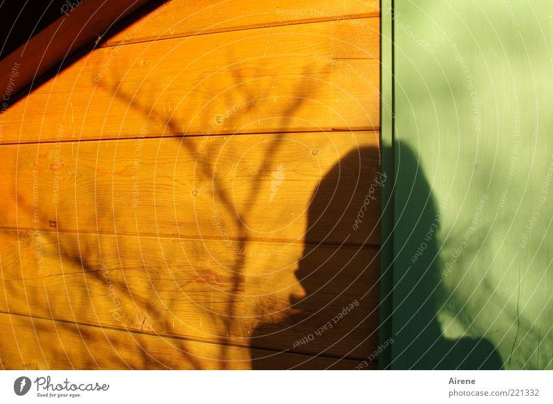 Wo viel Licht ... Frau Erwachsene Kopf 1 Mensch Sonnenlicht Schönes Wetter Ast Fensterladen Wand Holzwand träumen warten braun gold grün Kontrast unergründlich