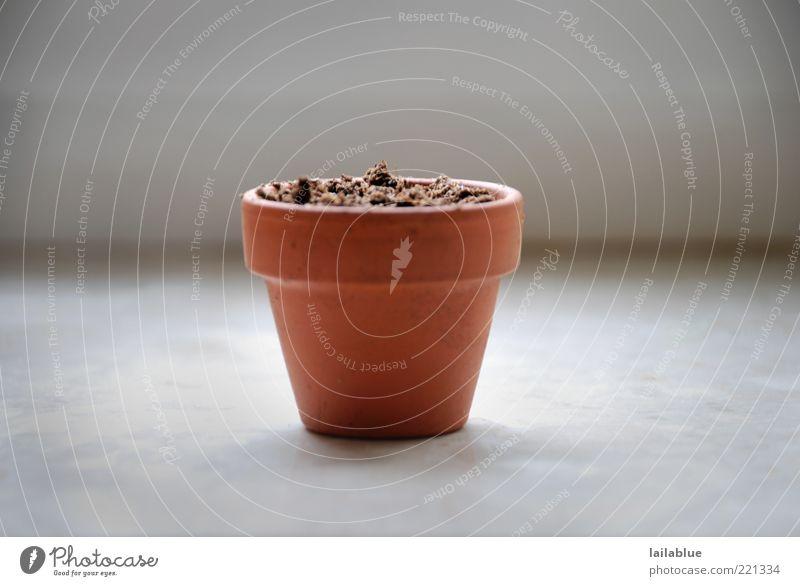 still empty kalt grau klein Erde braun warten Beginn leer Wachstum neu Blumentopf Vorfreude Ausdauer geduldig Neuanfang Fensterbrett
