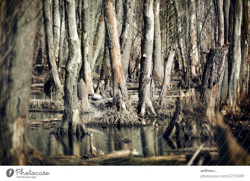 das moorschaf Natur Wasser Baum dunkel Umwelt braun kahl Sumpf Moor Usedom Moorsee
