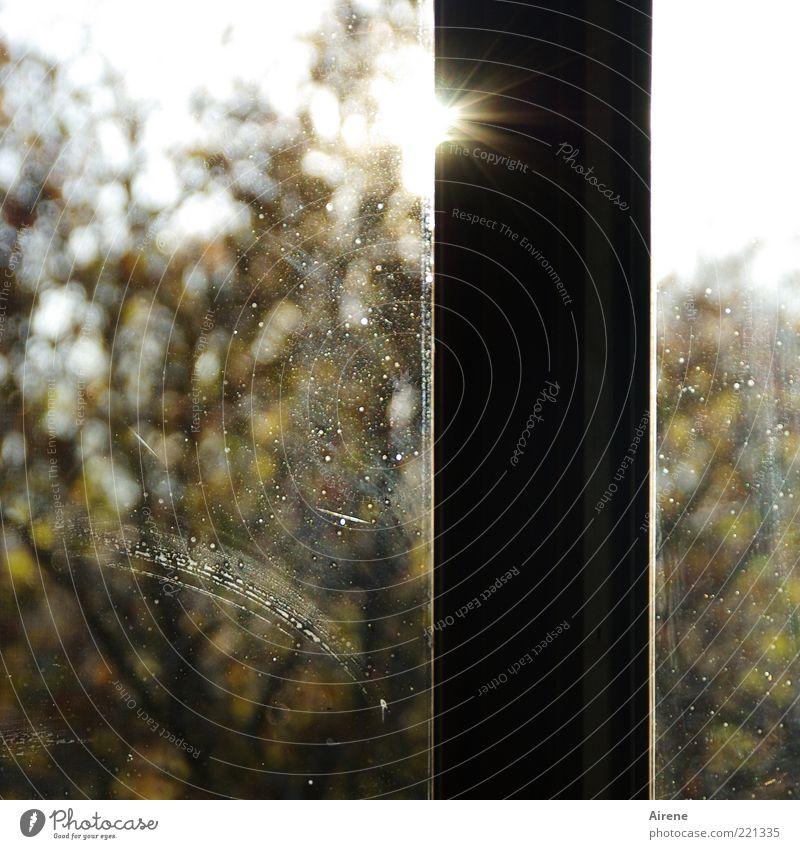 Putzstreifen weiß Baum Sonne grün schwarz gelb Herbst Fenster Garten braun dreckig Glas Fensterscheibe heiter Fensterrahmen Fensterblick