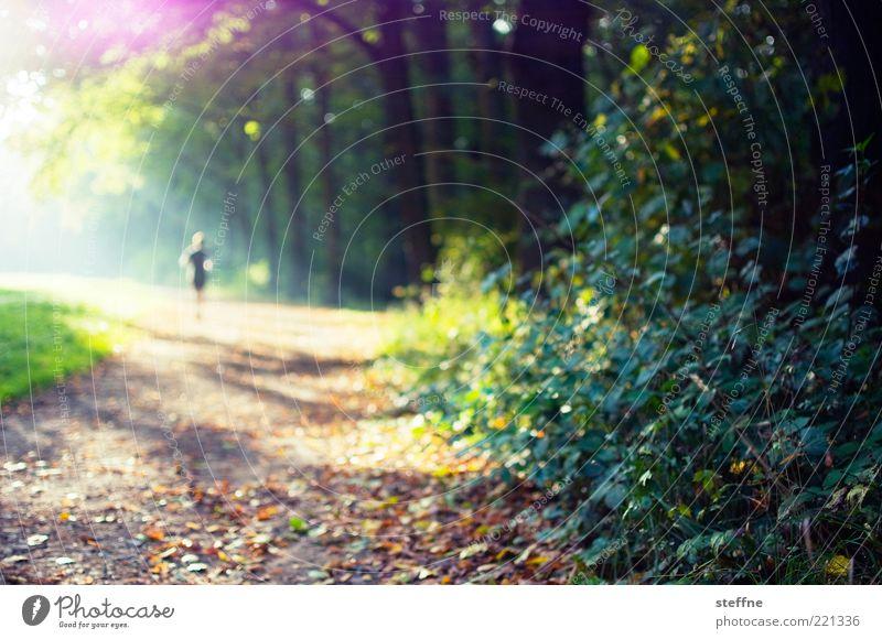 Wegelagerer 1 Mensch Natur Sonne Sonnenlicht Herbst Schönes Wetter Baum Sträucher Park Wald laufen Joggen Farbfoto mehrfarbig Gegenlicht Sonnenstrahlen einzeln