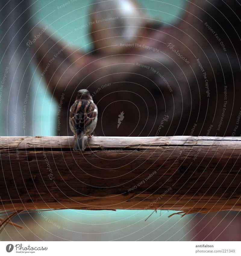 Vogel vs. Nashorn Tier Auge braun sitzen Tiergesicht Flügel beobachten Zoo Baumstamm Gehege Stall Toleranz gefiedert Schatten Mensch