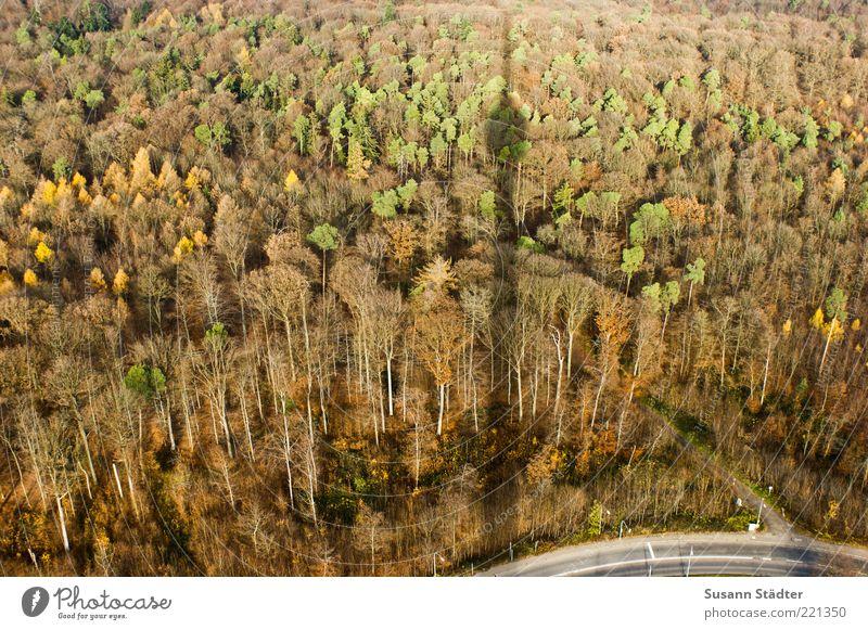 Schduagerter Landschaft Pflanze Herbst Schönes Wetter Baum Wald Straße hoch Fernsehturm Stuttgart Herbstfärbung mehrfarbig Kurve kalt braun oben Außenaufnahme