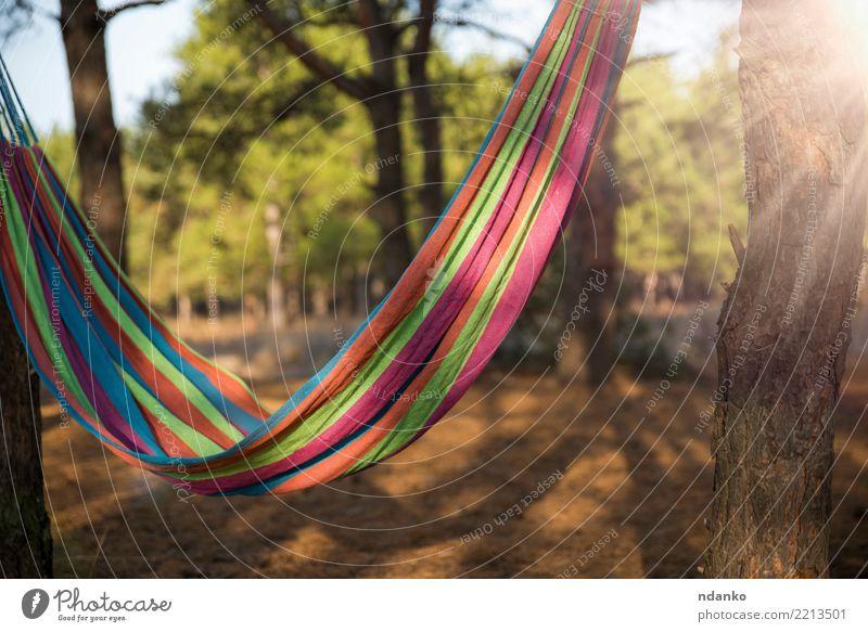 Hängematte zwischen zwei Bäumen hängen Lifestyle Erholung Freizeit & Hobby Ferien & Urlaub & Reisen Sommer Garten Natur Landschaft Sonnenlicht Baum Wald grün