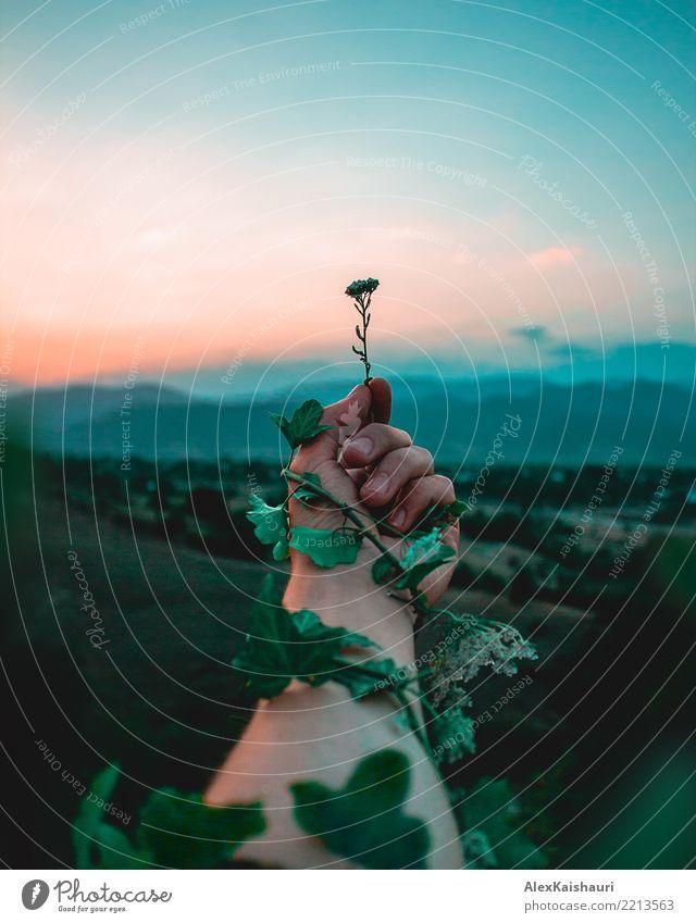 Himmel Natur Ferien & Urlaub & Reisen Jugendliche Mann Pflanze Sommer grün Landschaft Freude Wald Berge u. Gebirge 18-30 Jahre Erwachsene Lifestyle Blüte