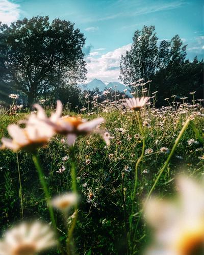 Himmel Natur Ferien & Urlaub & Reisen Pflanze Sommer grün Landschaft Baum Blume ruhig Wald Berge u. Gebirge Umwelt Frühling Wiese Gras