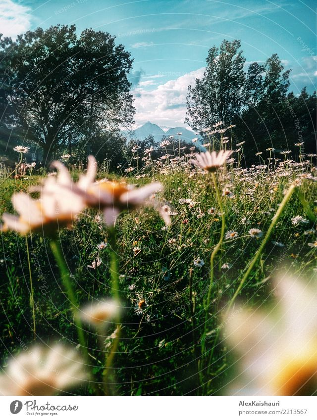 Natur von Ostgeorgien Ferien & Urlaub & Reisen Abenteuer Freiheit Camping Sommer Umwelt Landschaft Pflanze Erde Himmel Frühling Schönes Wetter Baum Blume Gras