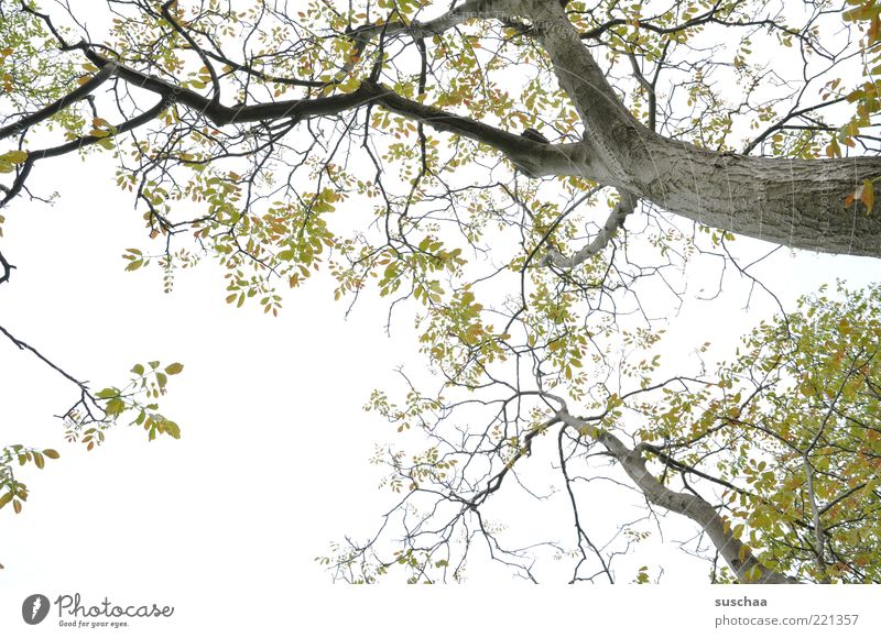 warten auf den ... Himmel Natur grün Baum Pflanze Blatt Erholung Umwelt Frühling Luft Wetter frisch Wachstum Klima Ast Baumstamm