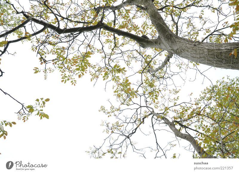 warten auf den ... Umwelt Natur Luft Himmel Frühling Klima Wetter Pflanze Baum frisch grün Erholung Wachstum Blatt Laubbaum Ast Baumstamm Jahreszeiten Farbfoto