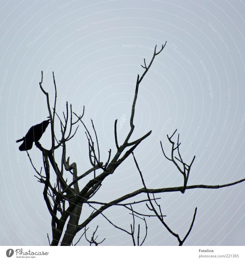trostlos Umwelt Natur Pflanze Tier Urelemente Luft Himmel Herbst Baum Wildtier Vogel 1 dunkel kalt trist trocken schwarz weiß Rabenvögel Farbfoto
