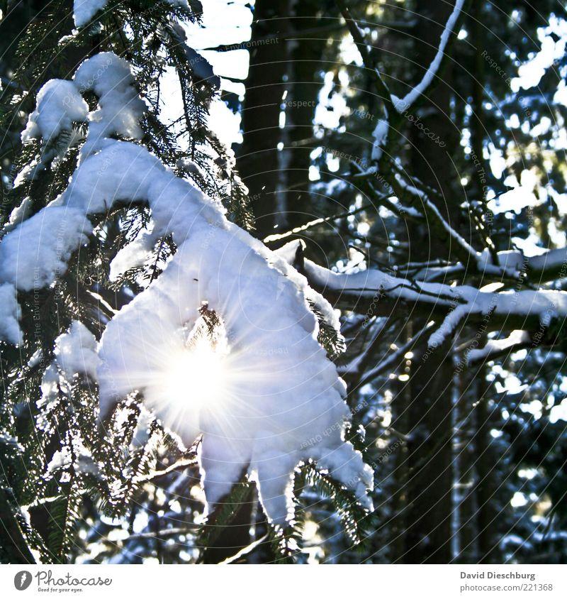Snow vs. sun Natur Pflanze Winter Schönes Wetter Eis Frost Schnee Wärme Baum Wald schwarz weiß Ast Winterstimmung Winterwald Beleuchtung Dezember Januar kalt