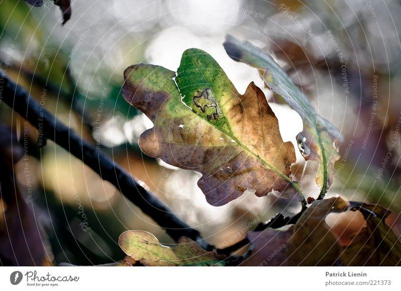 Gegenlicht Natur schön grün Pflanze Blatt Herbst Luft Stimmung glänzend Wetter Umwelt frisch Ast entdecken leuchten