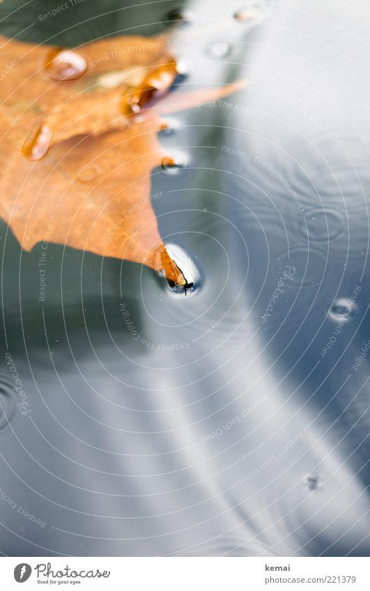 Kleine Kreise Umwelt Natur Wasser Herbst Klima schlechtes Wetter Unwetter Regen Blatt dunkel nass braun gold Im Wasser treiben Wasseroberfläche Farbfoto