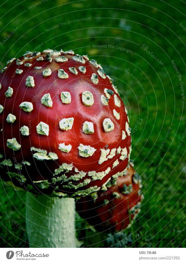 Mutter mit Kind. Natur grün rot ruhig Wiese Herbst Farbstoff klein groß Erde ästhetisch gefährlich authentisch fantastisch Stengel entdecken