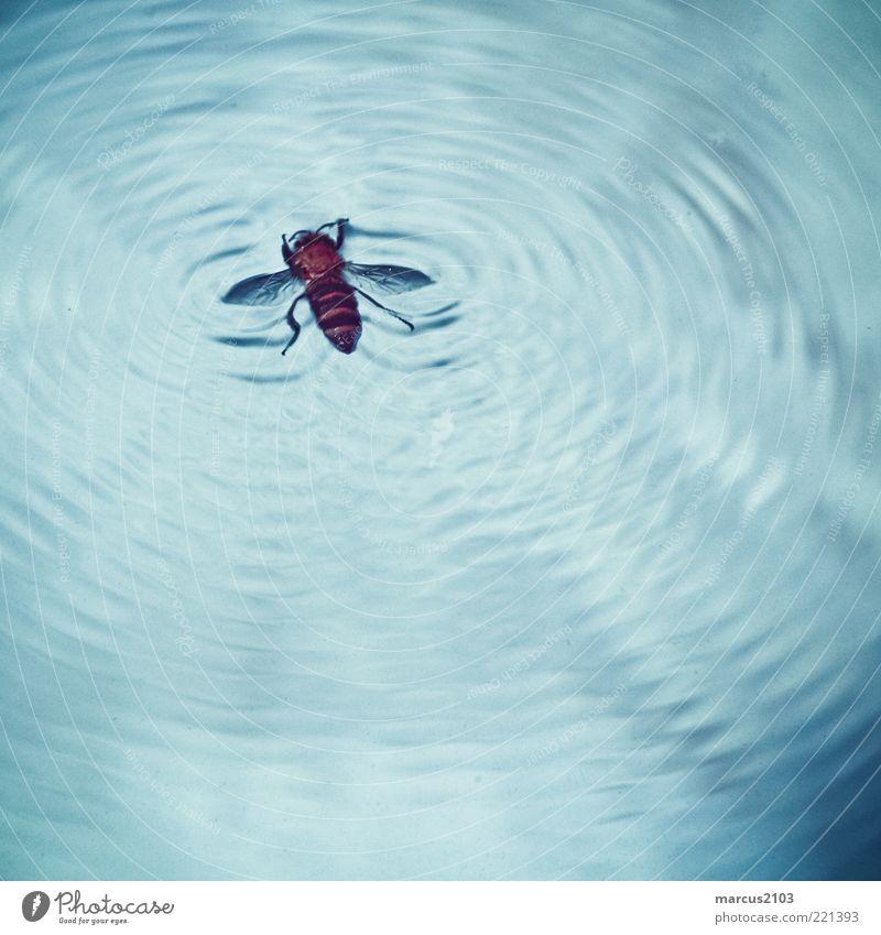 fly on water Wasser blau Tier Tod braun Wellen Fliege gefährlich bedrohlich Schwimmen & Baden Biene Wildtier Stress kämpfen Todesangst Spuren
