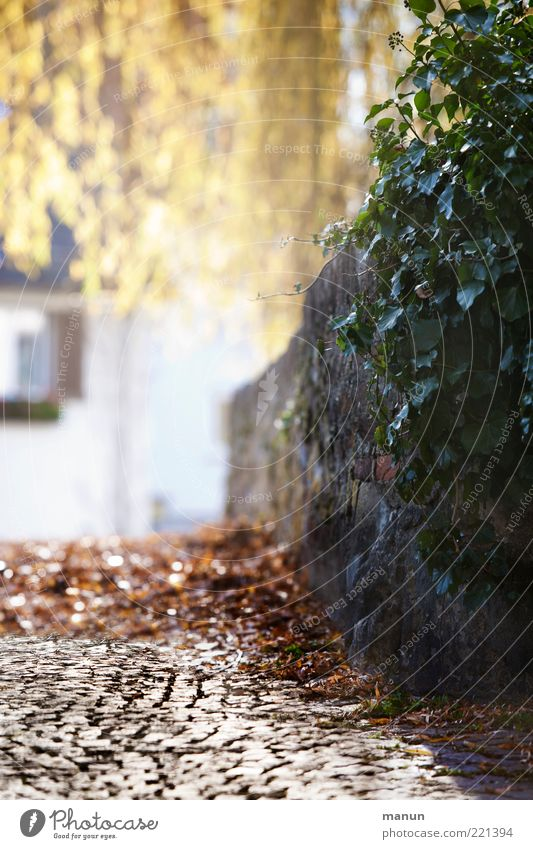 durch diese hohle Gasse.... (LT Ulm 14.11.10) Umwelt Natur Herbst Schönes Wetter Pflanze Efeu Herbstlaub herbstlich Altstadt Haus Mauerpflanze Mauerstein Wand