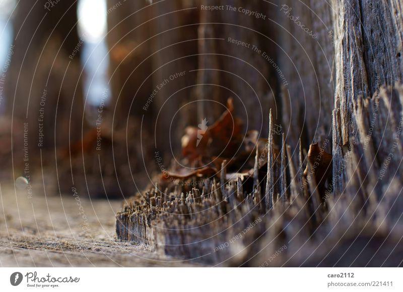 autsch! Natur Baum Wald Holz eckig natürlich stachelig braun Stimmung authentisch Farbfoto Außenaufnahme Tag Schwache Tiefenschärfe Spitze Waldboden