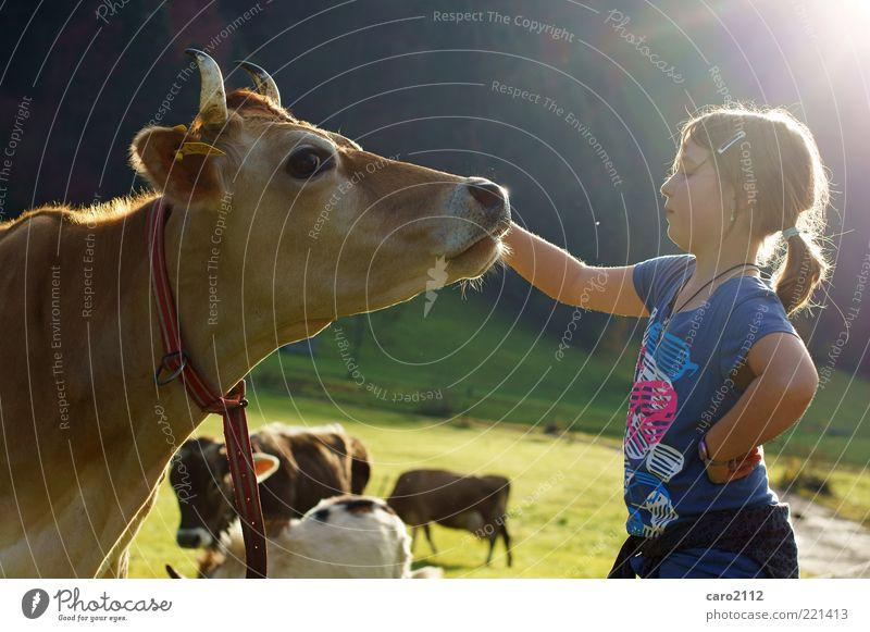 kuhle freundschaft Mensch Kind Natur Mädchen Tier Freundschaft Tourismus T-Shirt Tiergruppe natürlich Kindheit Mut Kuh Zusammenhalt Alm Zopf