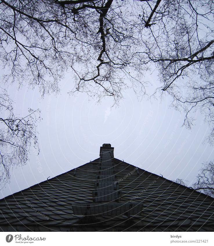 Stairway to chimney Gebäude Dach Schornstein außergewöhnlich Spitze ästhetisch Ordnung Symmetrie Treppe aufsteigen Himmel Baum Pyramide Schiefer beeindruckend