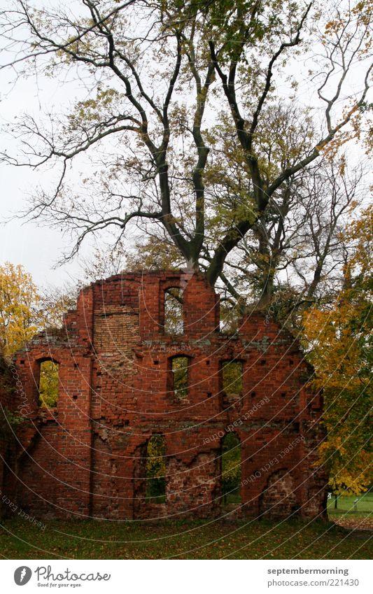 Ruine Herbst Baum alt kaputt Verfall Vergangenheit Farbfoto Außenaufnahme Menschenleer Zweige u. Äste Silhouette verfallen Backsteinwand Mauer Gemäuer