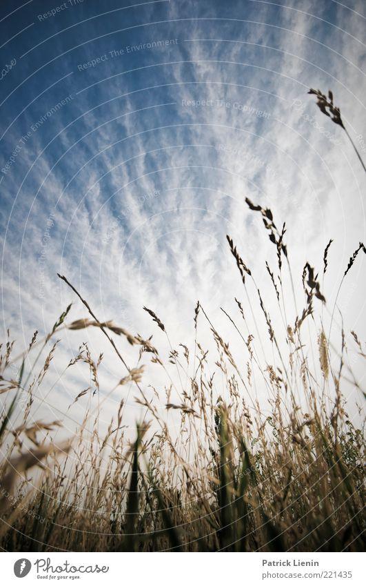 Just Got To Be Umwelt Natur Landschaft Pflanze Urelemente Luft Himmel Wolken Sommer Klima Wetter Schönes Wetter Gras Blatt Blüte Grünpflanze Wildpflanze Wiese