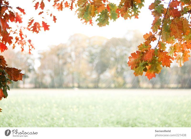 Herbstwald Natur Baum Pflanze ruhig Blatt kalt Erholung Landschaft Feld Nebel entdecken Wald Rahmen Herbstlaub Laubbaum