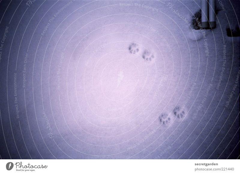 die wagnis auf ungewohntes terrain. blau Winter schwarz dunkel kalt Schnee Spuren analog unten Abend Fährte Vignettierung Morgen Schneespur