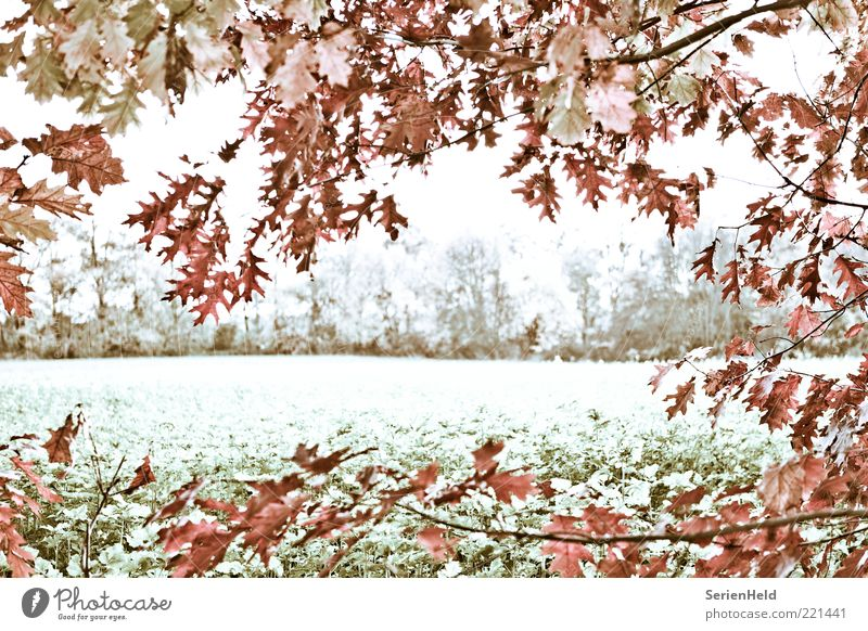 Kalter Herbsttag Natur Baum Pflanze ruhig Blatt Einsamkeit Wald Leben kalt Landschaft Feld Zeit Wandel & Veränderung Vergänglichkeit Idylle