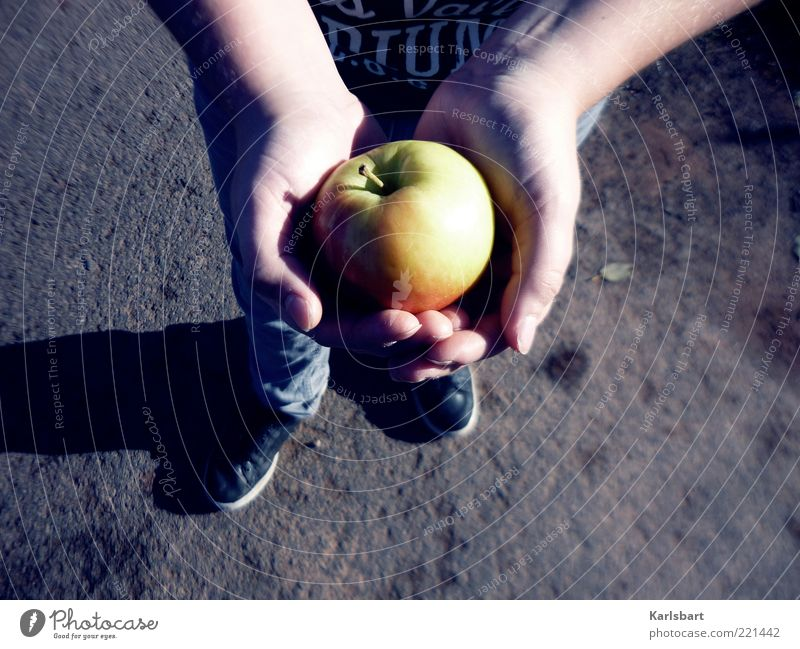 geben. nehmen. Mensch Kind Natur Hand Herbst Leben Ernährung Junge Lebensmittel Fuß Gesundheit Kindheit Kraft Frucht Haut Finger