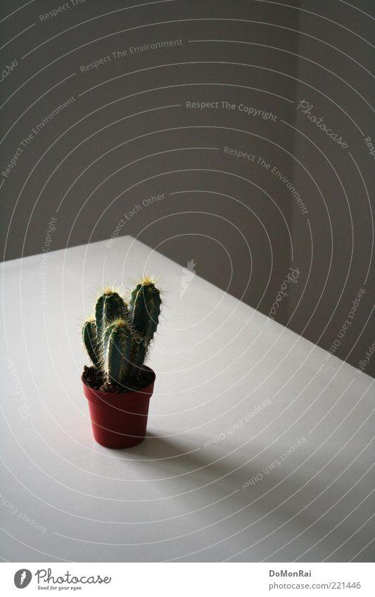 Stecher Natur Pflanze Kaktus Topfpflanze exotisch eckig klein Spitze stachelig grün diszipliniert Ordnungsliebe Einsamkeit skurril unschuldig obskur wehrhaft