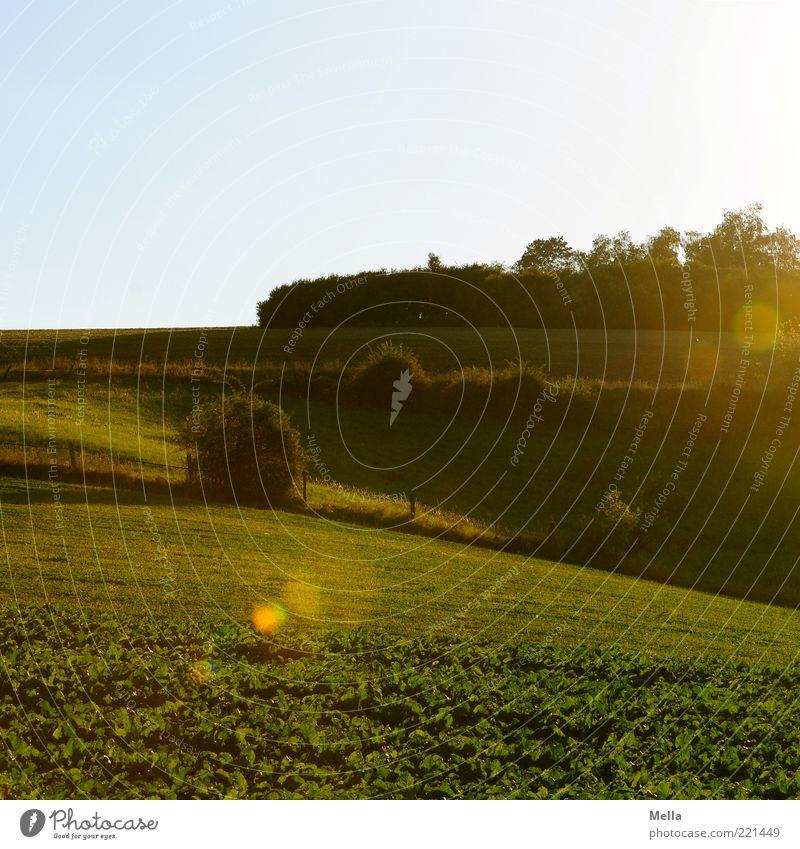 Hinterland Umwelt Natur Landschaft Sonnenlicht Schönes Wetter Sträucher Wiese Feld leuchten natürlich grün Idylle ruhig Zaun Weide Blendenfleck Blendeneffekt
