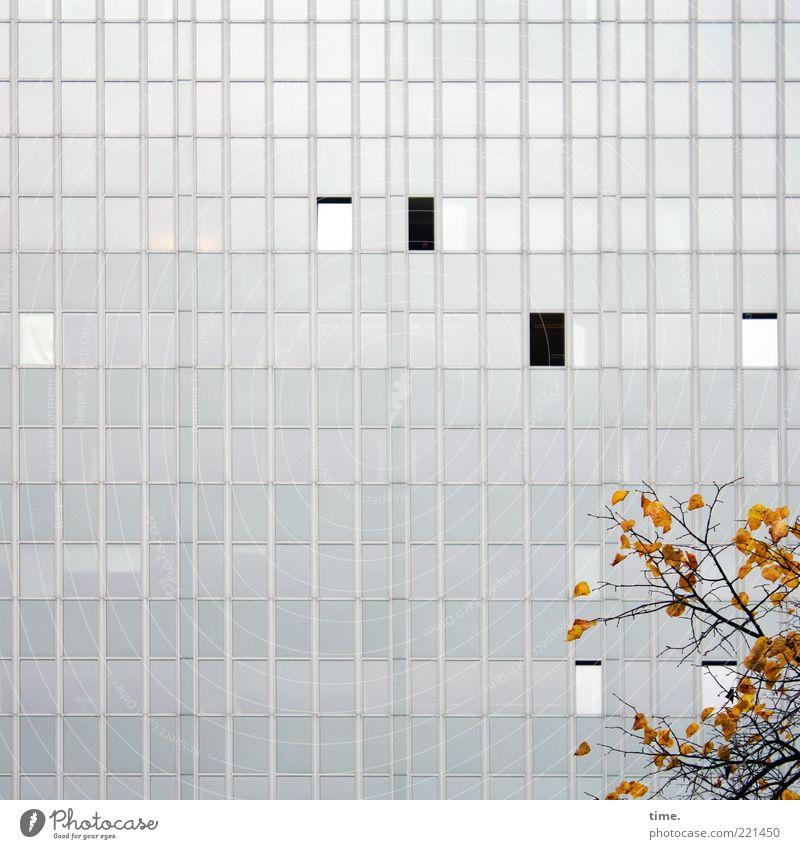 Innenhof mit Herbstdeko Umwelt Natur Blatt Hochhaus Architektur Fassade Fenster grau Ast Glasfassade offen geschlossen parallel vertikal horizontal kalt