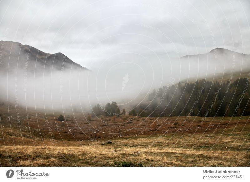 Nebelwallen Berge u. Gebirge Umwelt Natur Landschaft Himmel Wolken Herbst schlechtes Wetter Baum Felsen Alpen Gipfel entdecken natürlich Einsamkeit einzigartig