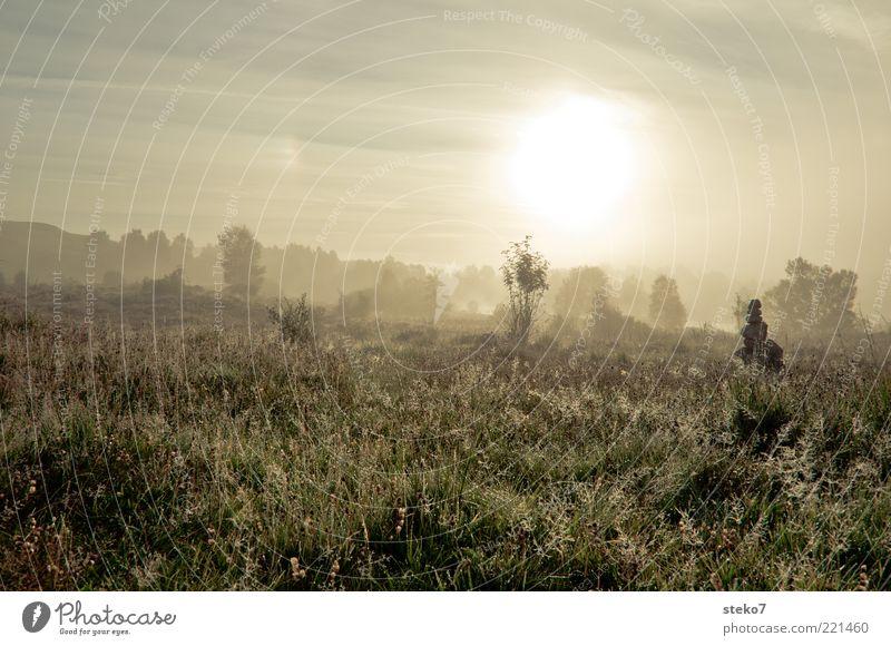 viel zu früh Natur Sonne ruhig Ferne Wiese Gras Landschaft Wassertropfen Horizont ästhetisch Tau Halm Schottland Morgendämmerung Flußauen