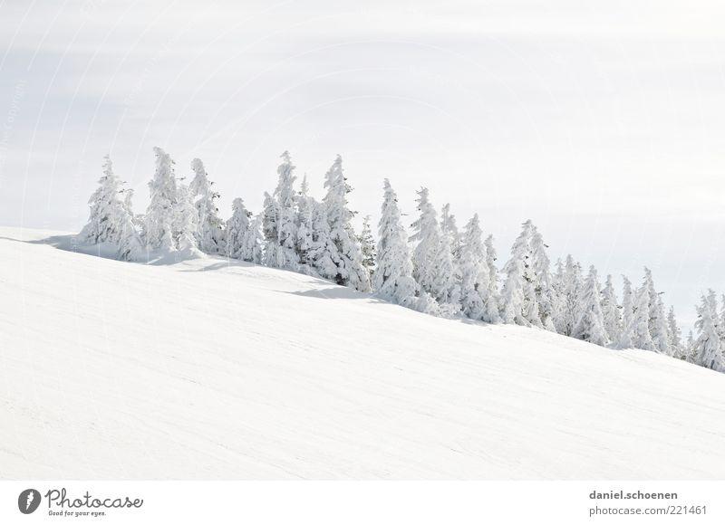 viele Weihnachtsbäume Winter Schnee Berge u. Gebirge Schönes Wetter Eis Frost Hügel hell weiß Tanne Schwarzwald Feldberg Gedeckte Farben Textfreiraum oben