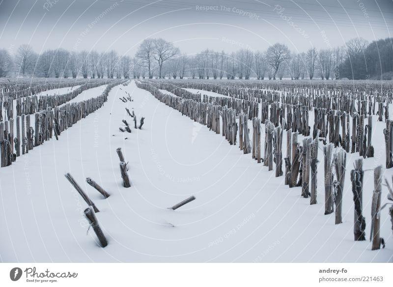 Winterfeld Himmel Natur weiß grün Baum Winter kalt dunkel Schnee Landschaft Gefühle Feld Horizont Unwetter Jahreszeiten Schneelandschaft