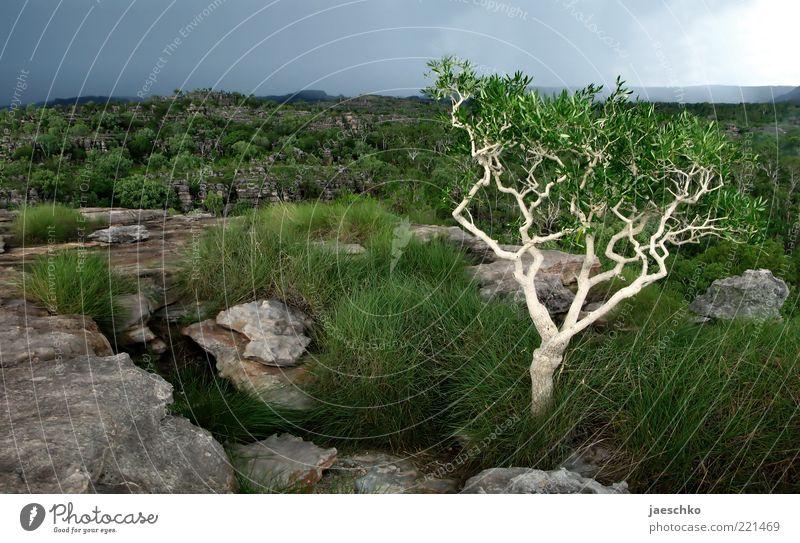 There will be rain Natur Baum grün Einsamkeit Ferne dunkel Gras Regen Landschaft Umwelt Felsen ästhetisch Sträucher authentisch bedrohlich einzigartig