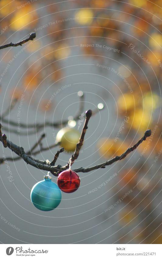 Balls & Dots Weihnachten & Advent Winter gelb Wand Herbst grau Glas glänzend Dekoration & Verzierung leuchten Kugel hängen Christbaumkugel Zweig Tradition