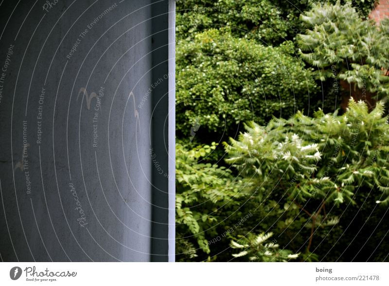 Axel E. Fischer fordert Sommerloch für das ganze Jahr Blatt Wand Mauer Vogel wandern Sträucher gut Grünpflanze Kritzelei Essigbaum