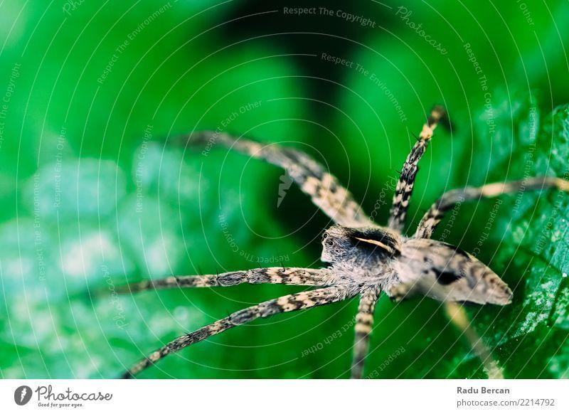 Kinderzimmer Netzspinne sitzend auf grünem Blatt im Garten Umwelt Natur Pflanze Tier Sommer Sträucher Park Feld Wildtier Spinne Tiergesicht 1 beobachten