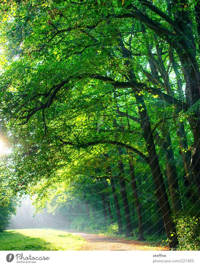 waldi Natur Sonnenlicht Schönes Wetter Park Wald grün Romantik Spaziergang hell HDR Farbfoto Außenaufnahme Gegenlicht Sonnenstrahlen Blatt Wege & Pfade