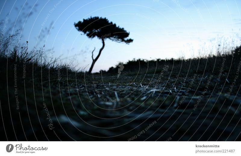 bretagne savagne Natur Landschaft Pflanze Erde Himmel Wolkenloser Himmel Baum Gras Sträucher Grünpflanze Wildpflanze trocken blau schwarz Bretagne Frankreich