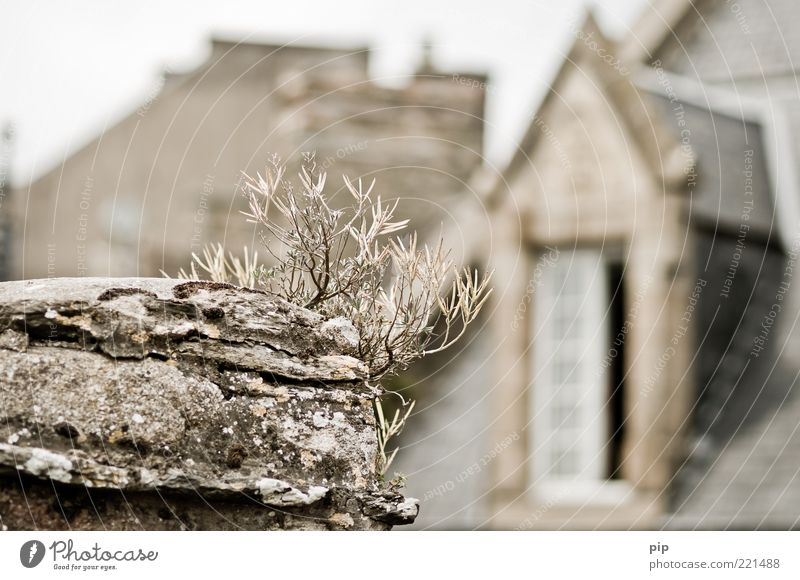 zimmer mit aussicht Pflanze Haus Wand oben Fenster Gras grau Mauer Gebäude Dach trocken vertrocknet Bruch Dachgiebel Flechten