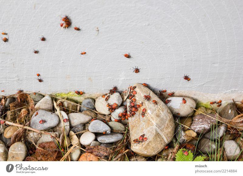 Bugs Tier Erde Mauer Wand Käfer Tiergruppe Fressen krabbeln Ekel Zusammensein klein natürlich niedlich unten orange rot Optimismus Kraft Einigkeit Tierliebe