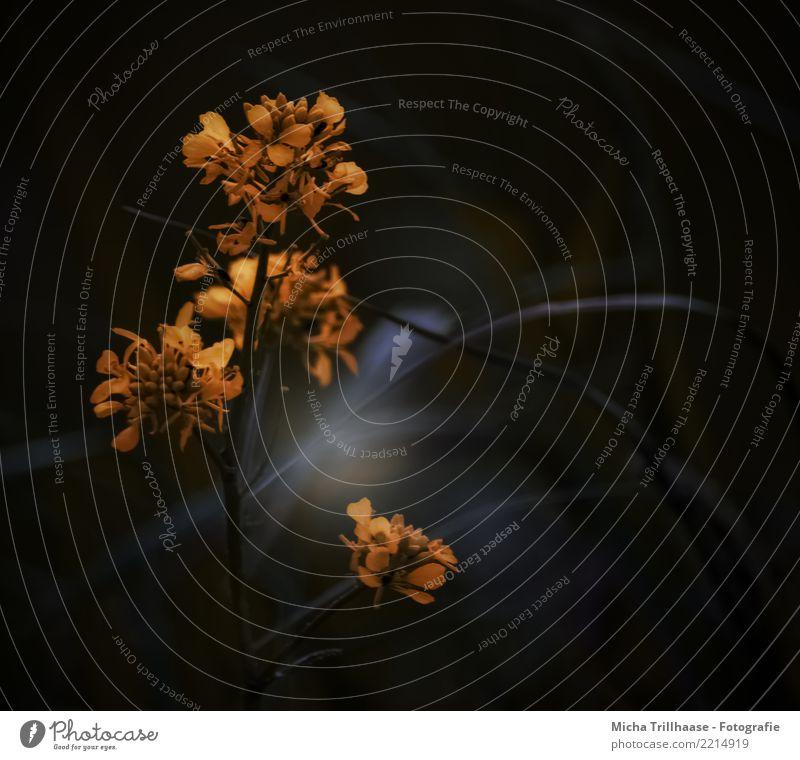 Licht und Schatten Natur Pflanze blau schön Blume Blatt dunkel schwarz Umwelt Blüte Wiese natürlich orange Design leuchten Wachstum